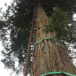 RCC Tree Ladder - South