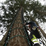 Tree-Ladder-